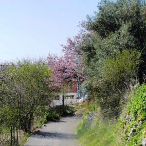 walk-nr-29-athani-mega-vouno-towards-aghios-petros-athani-68